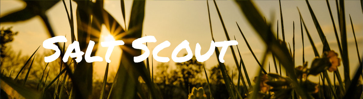 Salt-Scout-topbild